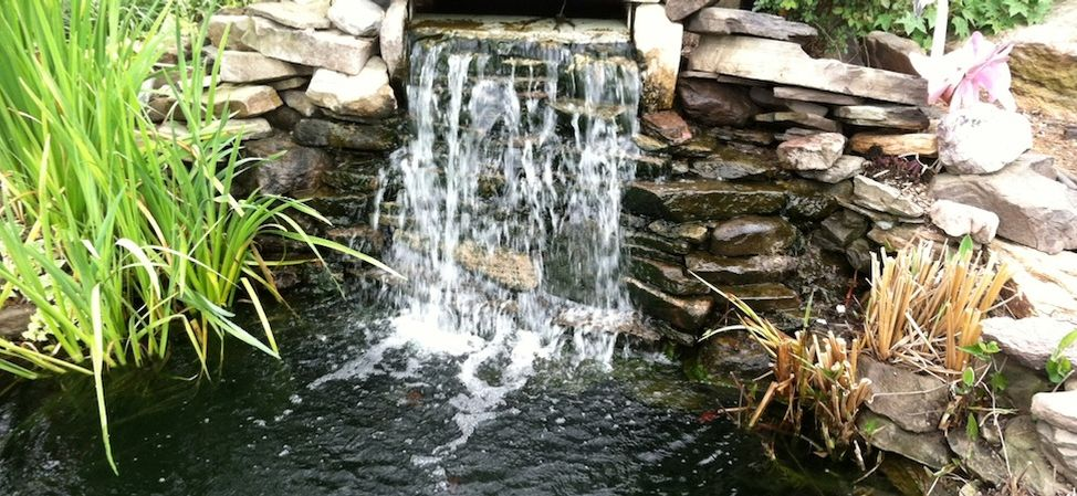 Waterfall Pond in Cary